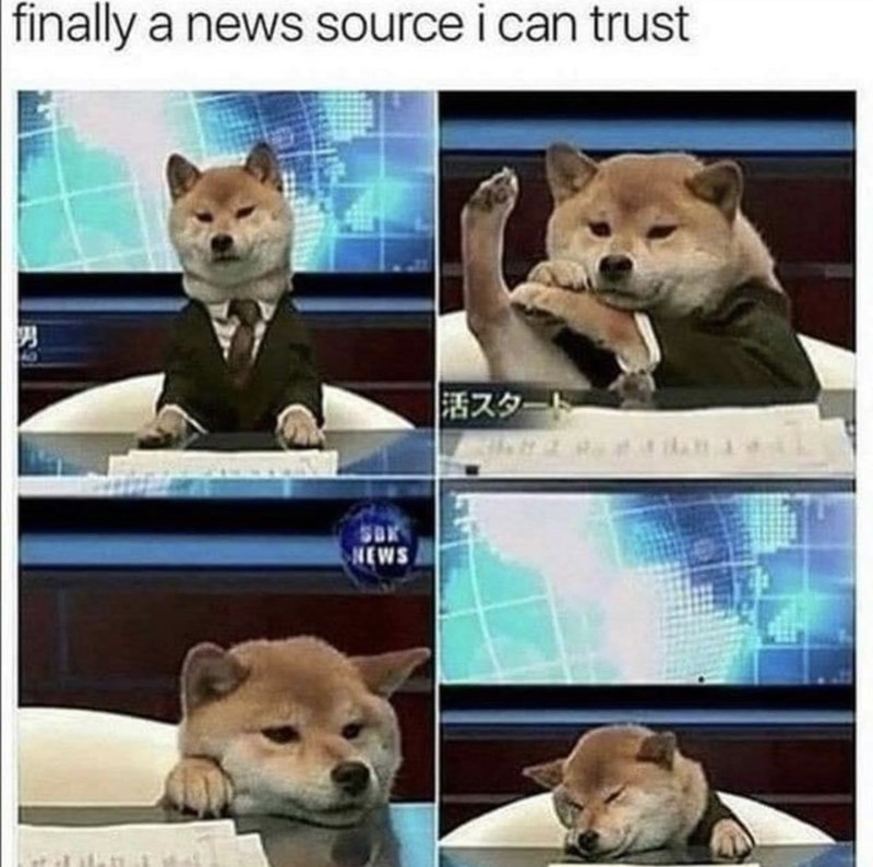 Dog - finally a news source i can trust 活スタート NEWS