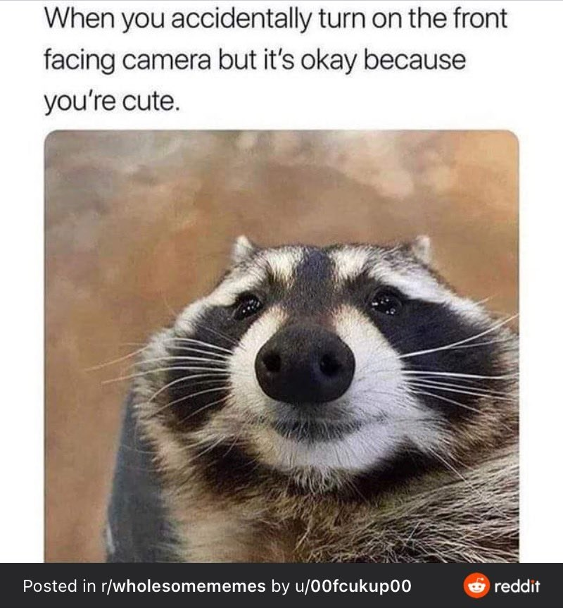 Organism - When you accidentally turn on the front facing camera but it's okay because you're cute. Posted in r/wholesomememes by u/00fcukup00 e reddit