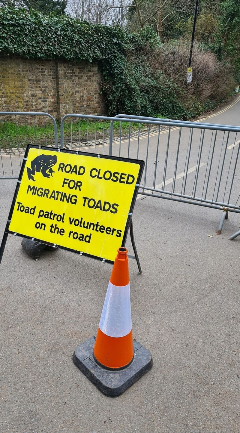 Motor vehicle - ROAD CLOSED FOR MIGRATING TOADS Toad patrol volunteers on the road
