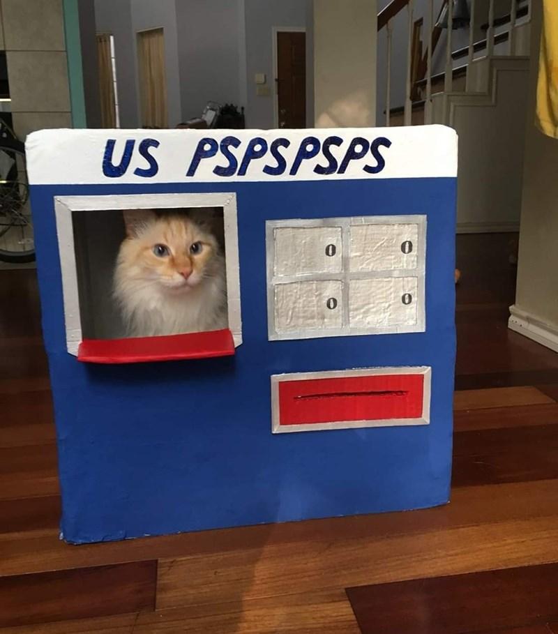 Cat - US PSPSPSPS