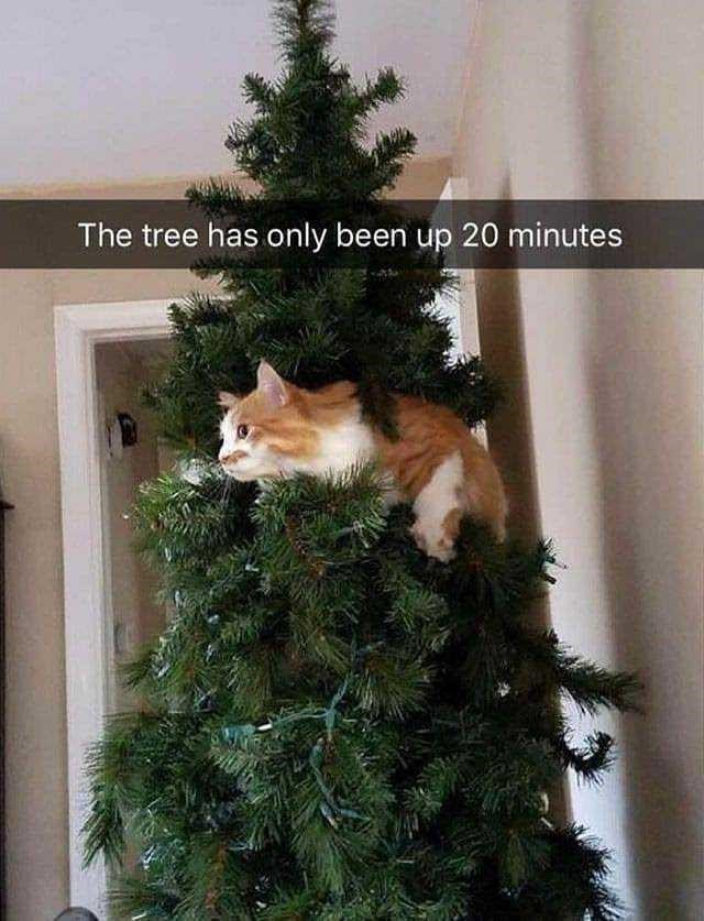 Christmas tree - The tree has only been up 20 minutes