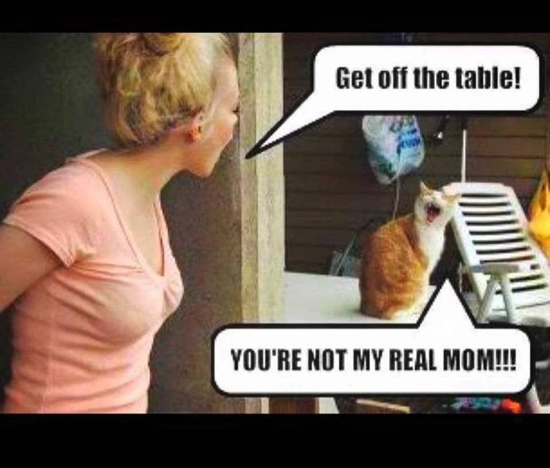 Vertebrate - Get off the table! YOU'RE NOT MY REAL MOM!!!