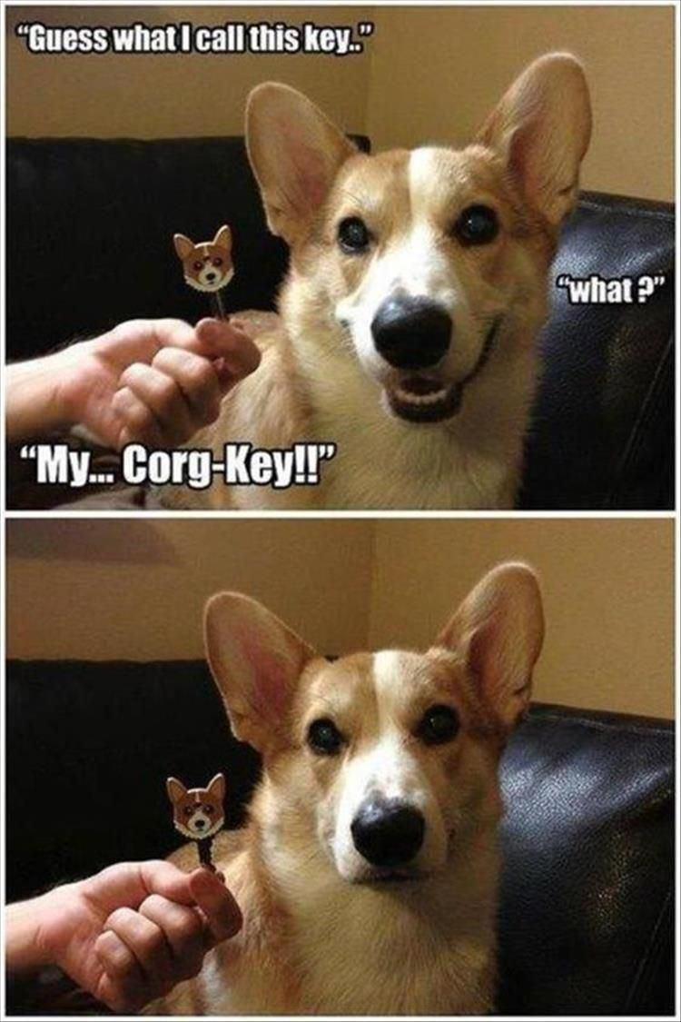 "Dog - ""Guess what I cal this key."" ""what ?"" ""My. Corg-Key!"""
