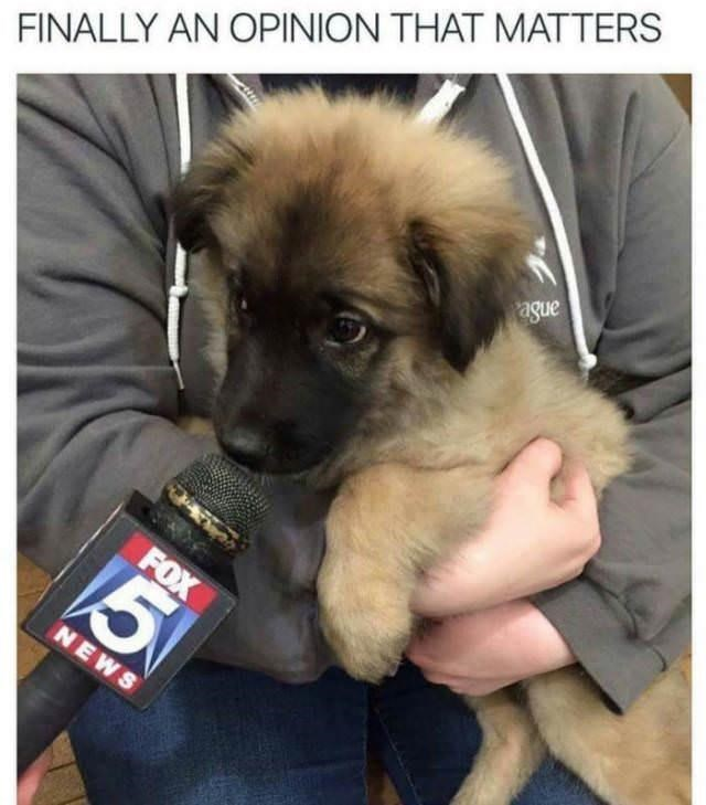 Dog - FINALLY AN OPINION THAT MATTERS ague FOX NEWS