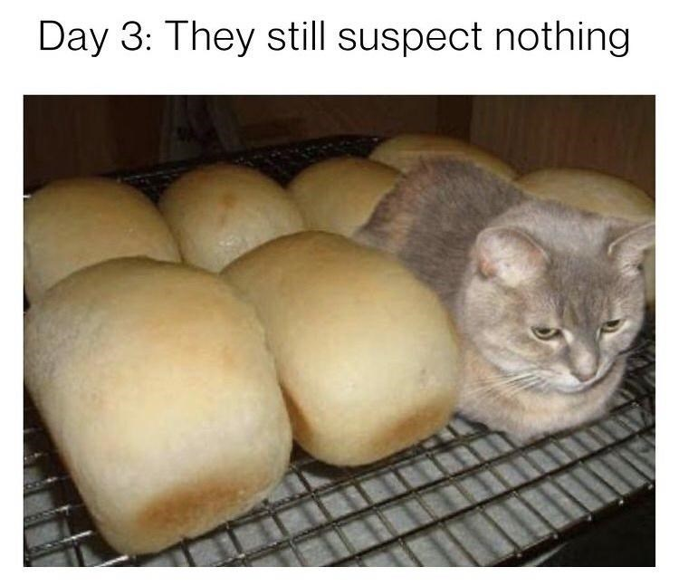 Cat - Day 3: They still suspect nothing