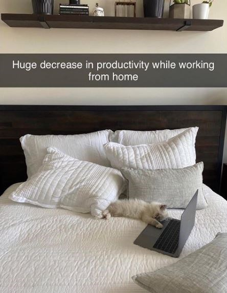 Furniture - Huge decrease in productivity while working from home