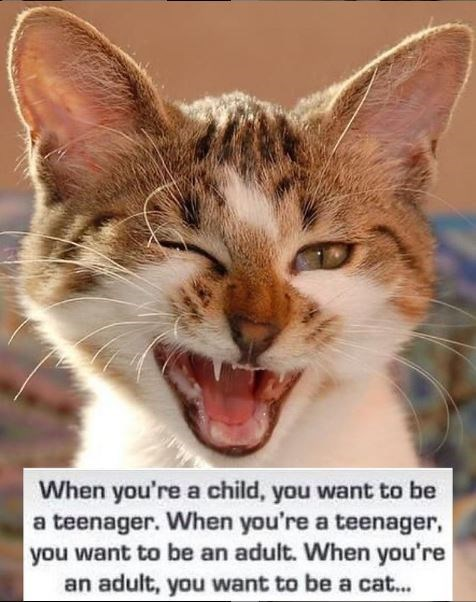 Nose - When you're a child, you want to be a teenager. When you're a teenager, you want to be an adult. When you're an adult, you want to be a cat...