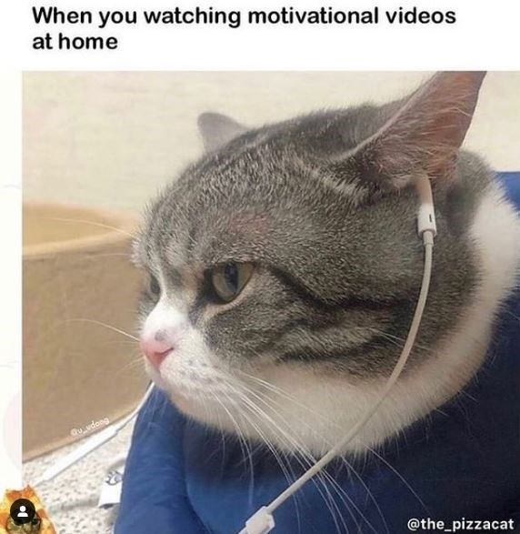 Photograph - When you watching motivational videos at home Gu_vdong @the_pizzacat