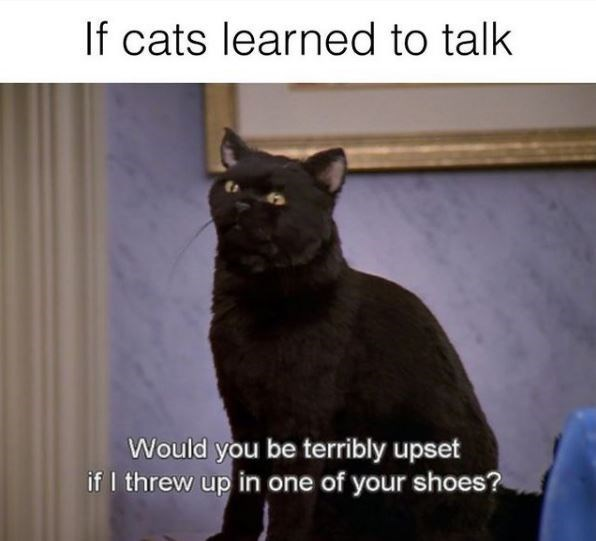 Cat - If cats learned to talk Would you be terribly upset if I threw up in one of your shoes?
