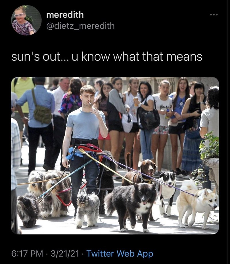 Dog - meredith @dietz_meredith sun's out... u know what that means 6:17 PM · 3/21/21 · Twitter Web App