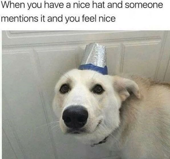 Dog - When you have a nice hat and someone mentions it and you feel nice