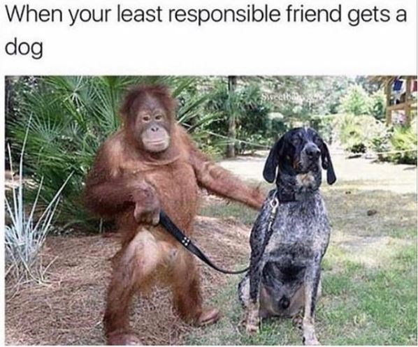 Vertebrate - When your least responsible friend gets a dog