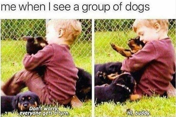 Dog - me when I see a group of dogs Don't worry everyone getsa turn. HI, buddy
