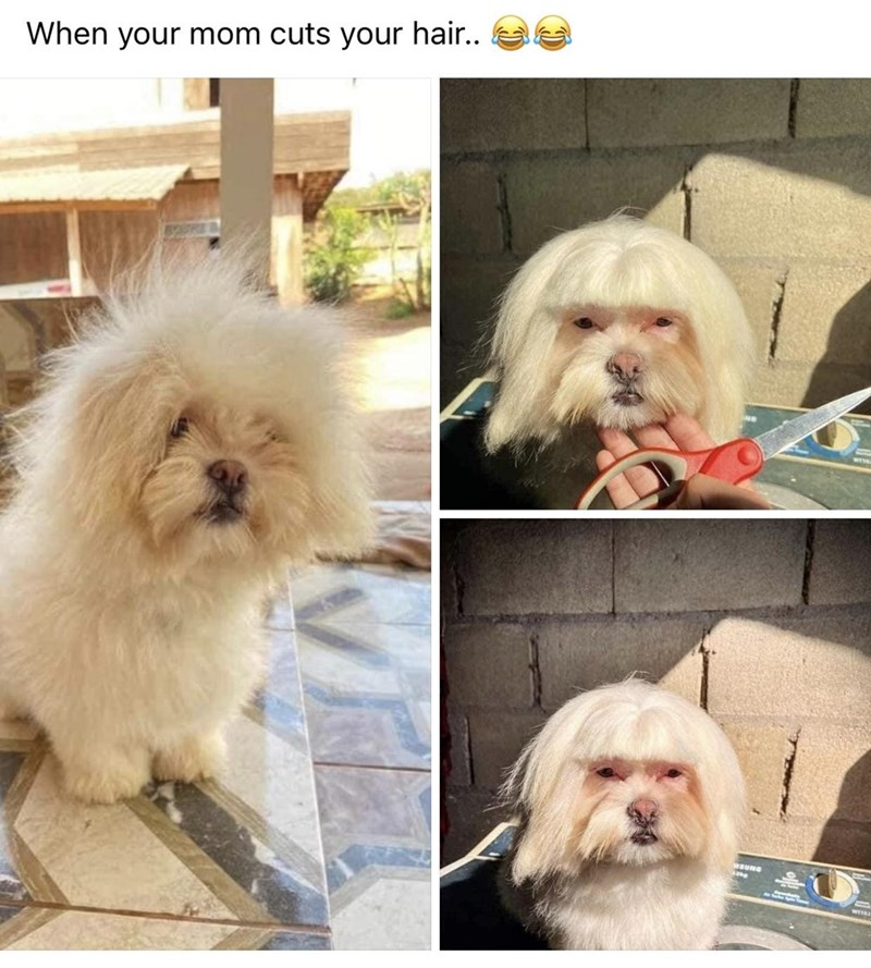 Dog - When your mom cuts your hair.. WESE BUNG