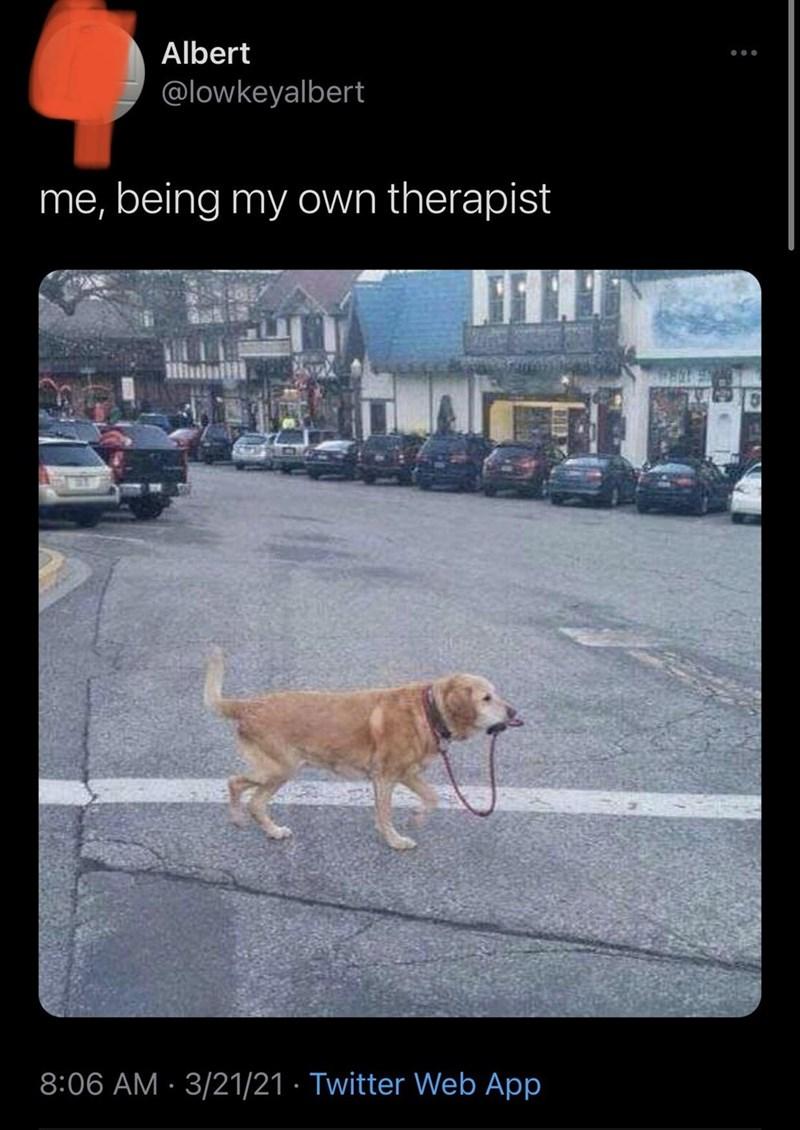 Dog - Albert @lowkeyalbert me, being my own therapist 8:06 AM · 3/21/21 · Twitter Web App