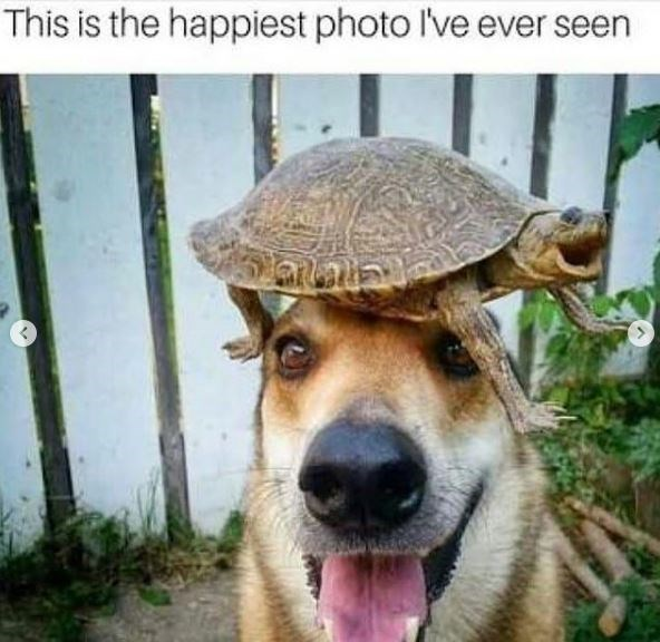 Dog - This is the happiest photo I've ever seen
