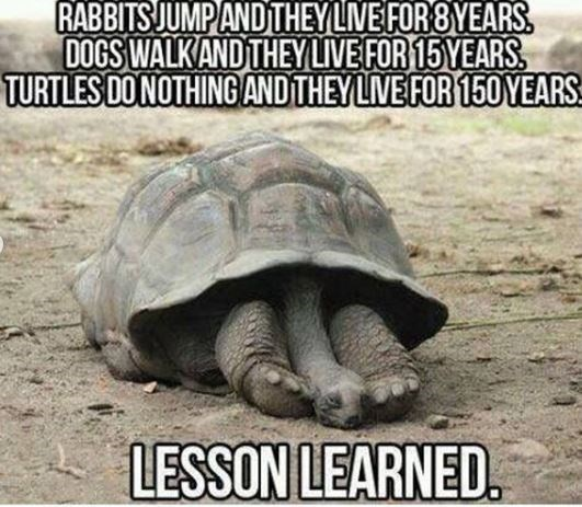 Ecoregion - RABBITS JUMP ANDTHEY LIVE FOR 8YEARS. DOGS WALK AND THEYLIVE FOR 15 YEARS TURTLES DO NOTHING AND THEY LIVE FOR 150 YEARS LESSON LEARNED.