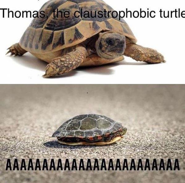 Photograph - Thomas, the claustrophobic turtle AAAAAAAAAAAAAAAAAAAAAAAA