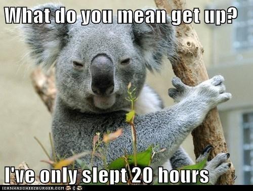 koala animal memes - 9602263040