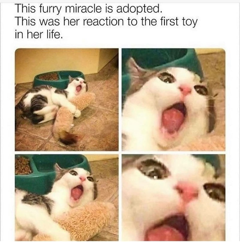Photograph - This furry miracle is adopted. This was her reaction to the first toy in her life.
