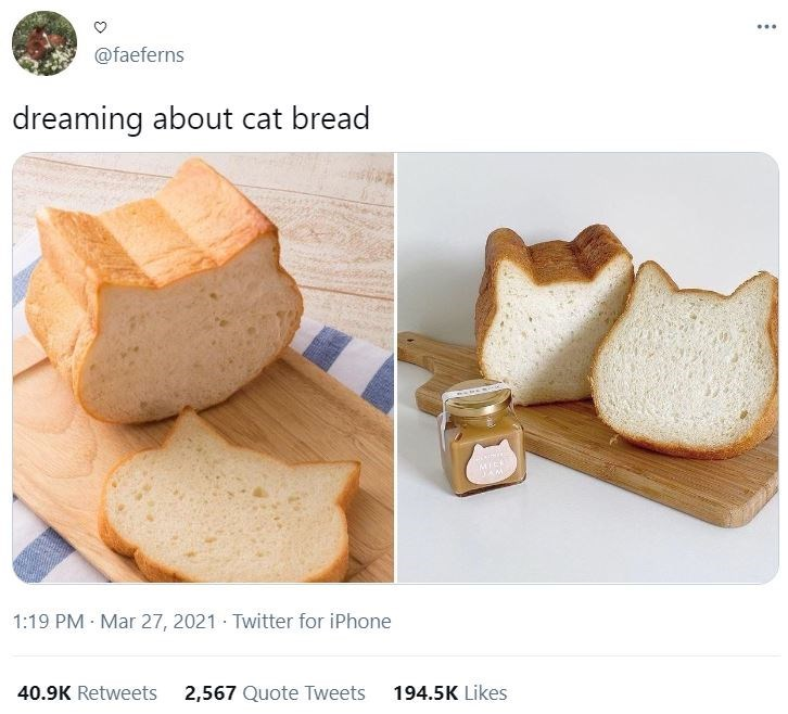Food - ... @faeferns dreaming about cat bread MICK 1:19 PM Mar 27, 2021 · Twitter for iPhone 40.9K Retweets 2,567 Quote Tweets 194.5K Likes