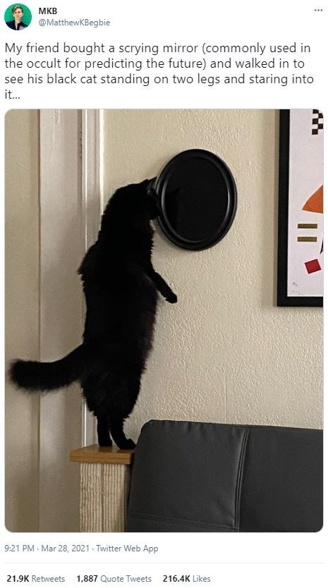 Cat - MKB @MatthewKBegbie My friend bought a scrying mirror (commonly used in the occult for predicting the future) and walked in to see his black cat standing on two legs and staring into it. 9:21 PM Mar 28, 2021 Twitter Web App 21.9K Retweets 1,887 Quote Tweets 216.4K Likes