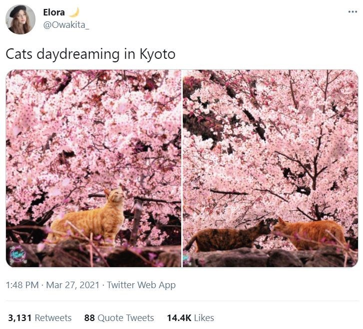 Flower - Elora @Owakita_ Cats daydreaming in Kyoto 1:48 PM · Mar 27, 2021 Twitter Web App 3,131 Retweets 88 Quote Tweets 14.4K Likes
