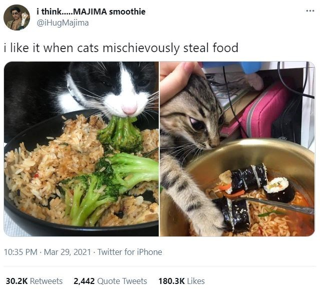 Food - i think..MAJIMA smoothie .·. @iHugMajima i like it when cats mischievously steal food 10:35 PM · Mar 29, 2021 · Twitter for iPhone 30.2K Retweets 2,442 Quote Tweets 180.3K Likes