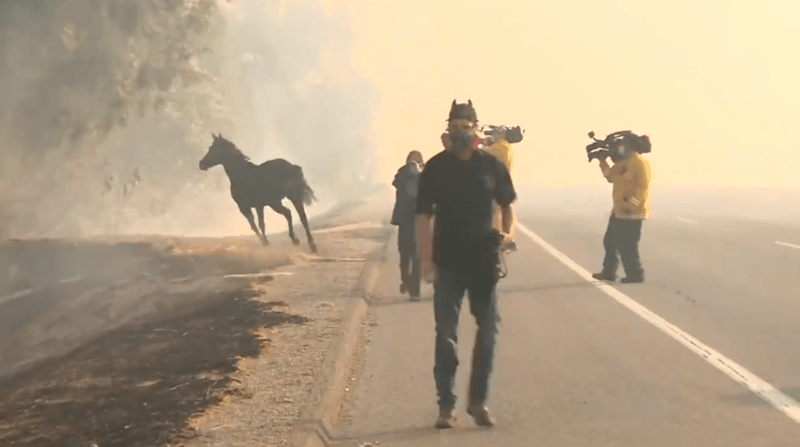 horse video in fire