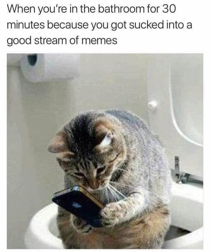 Cat - When you're in the bathroom for 30 minutes because you got sucked into a good stream of memes