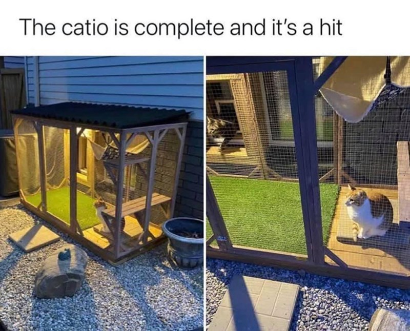 Blue - The catio is complete and it's a hit