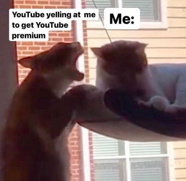 Cat - YouTube yelling at me to get YouTube premium Me: