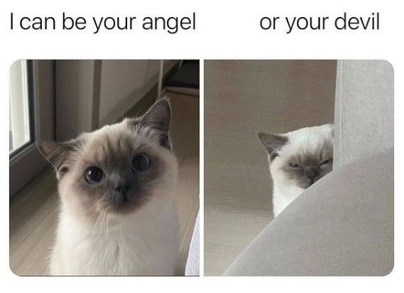 Cat - I can be your angel or your devil