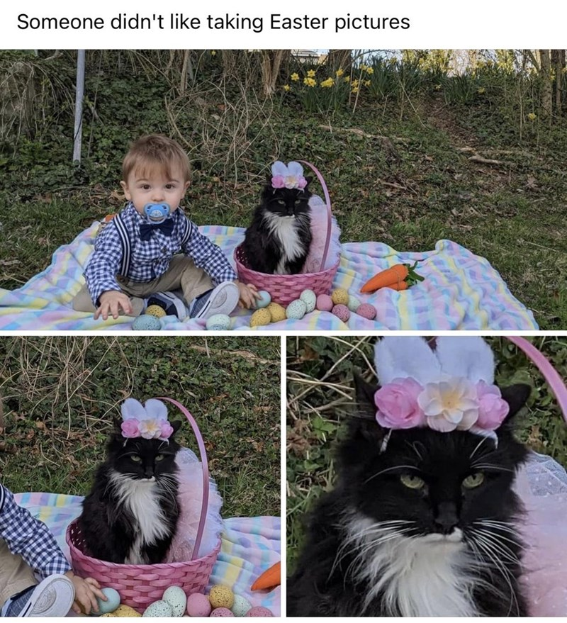 Photograph - Someone didn't like taking Easter pictures