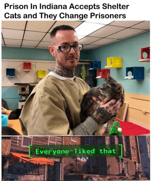 Eyewear - Prison In Indiana Accepts Shelter Cats and They Change Prisoners Everyone 1iked that