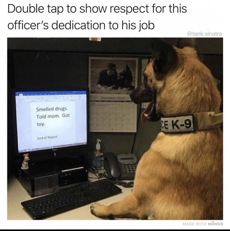 Computer - Double tap to show respect for this officer's dedication to his job @tank.sinatra November 20I8 Smelled drugs. Told mom. Got toy. CE K-9 End of Report. MADE WITH MOMUS