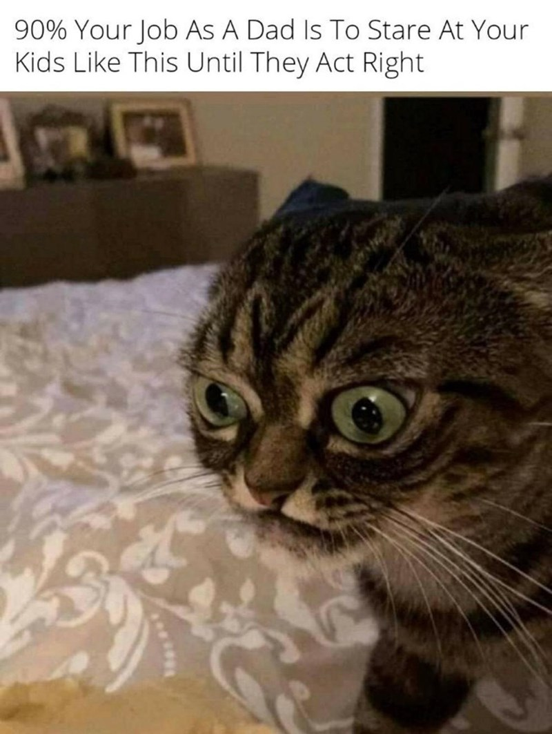 Cat - 90% Your Job As A Dad Is To Stare At Your Kids Like This Until They Act Right