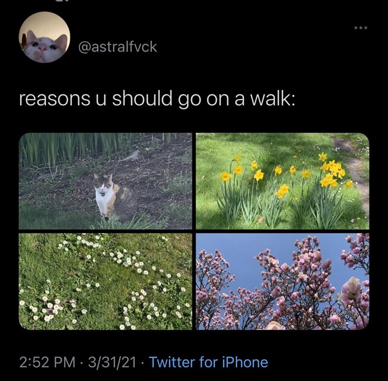 Flower - @astralfvck reasons u should go ona walk: 2:52 PM · 3/31/21 · Twitter for iPhone