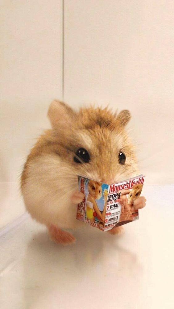 Rodent - MousesHealih MORE MUSC ESS TE 7TOTAL SMINUTE