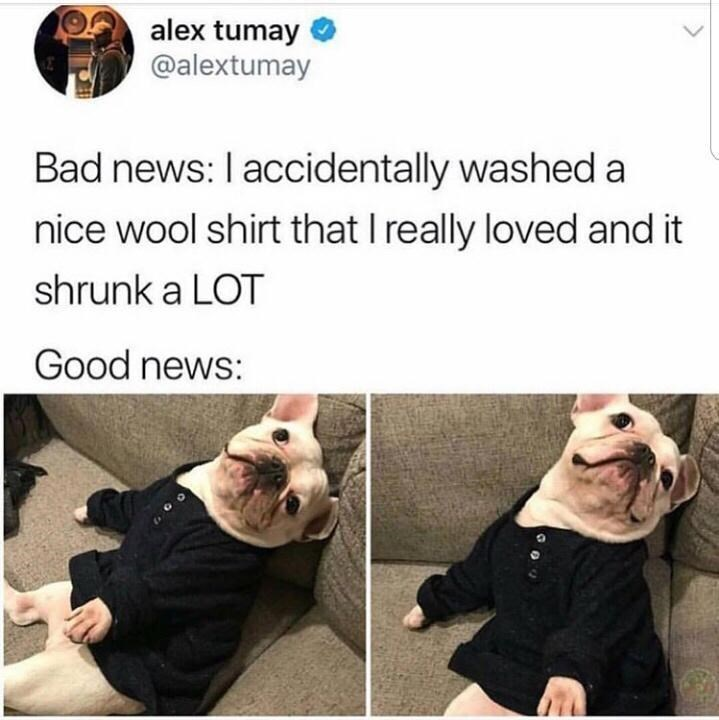 Facial expression - alex tumay @alextumay Bad news: I accidentally washed a nice wool shirt that I really loved and it shrunk a LOT Good news:
