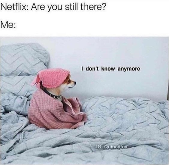 Comfort - Netflix: Are you still there? Me: I don't know anymore IG Quincyfox