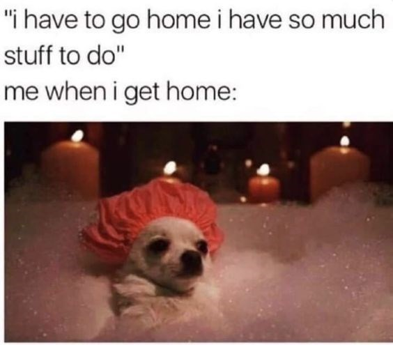 "Dog - ""i have to go home i have so much stuff to do"" me when i get home:"