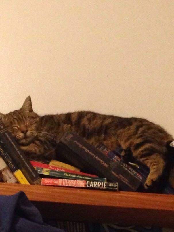 Cat - Y KTFEL AIZALVAGIGG n 300 Chaniy Lanis C The Ruidli STEPHEN HING CARRIE