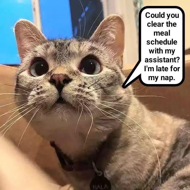 cat memes - 9603442176
