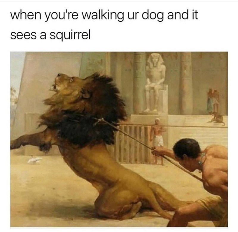 Human - when you're walking ur dog and it sees a squirrel