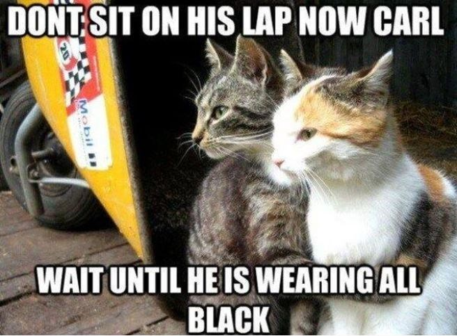 Cat - DONT SIT ON HIS LAP NOW CARL WAIT UNTIL HE IS WEARING ALL BLACK Mobil ..