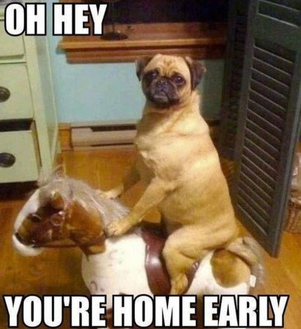 Dog - ОН НEY YOU'RE HOME EARLY