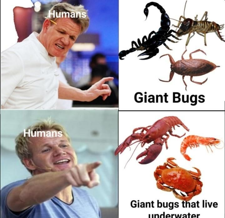 funny memes, memes, seafood