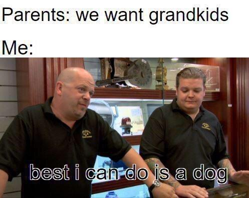 Arm - Parents: we want grandkids Me: best i canrdo is a dog