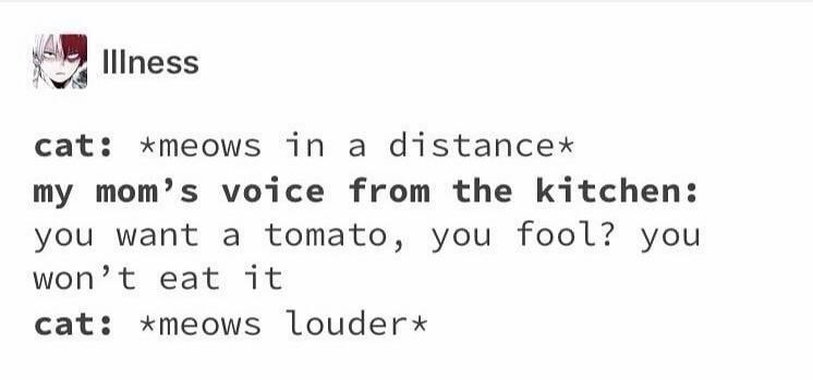 Rectangle - Illness cat: *meows in a distance* my mom's voice from the kitchen: you want a tomato, you fool? you won't eat it cat: *meows louder*